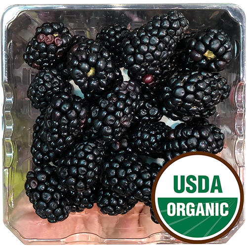 BLACKBERRIES ORGANIC 6oz