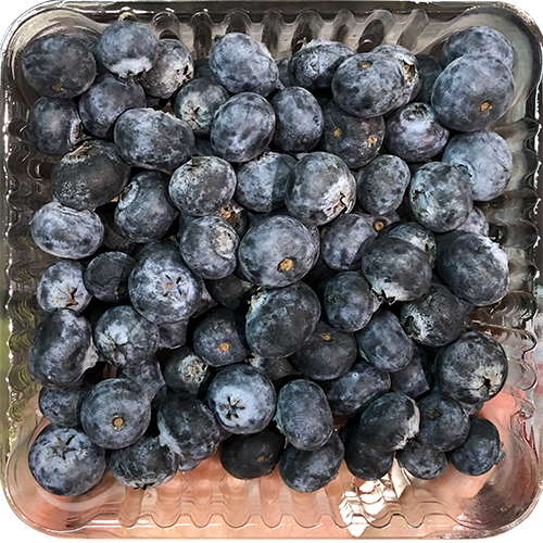 BLUEBERRIES 16oz
