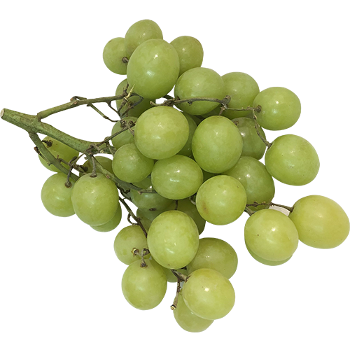 GREEN SEEDLESS GRAPES 16oz