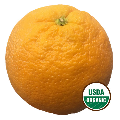NAVEL ORANGE LARGE ORGANIC