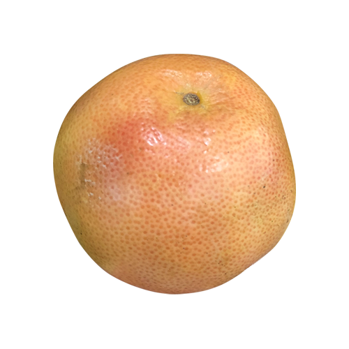 PINK/RED/RUBY GRAPEFRUIT SMALL
