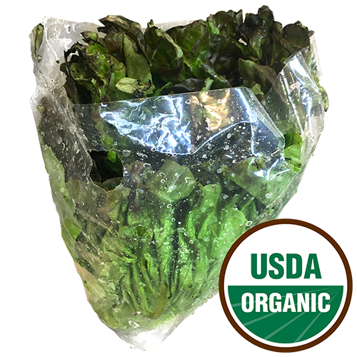RED LEAF LETTUCE ORGANIC