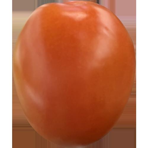 TOMATO PLUM.